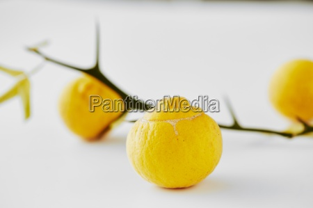 bitter oranges on a white surface