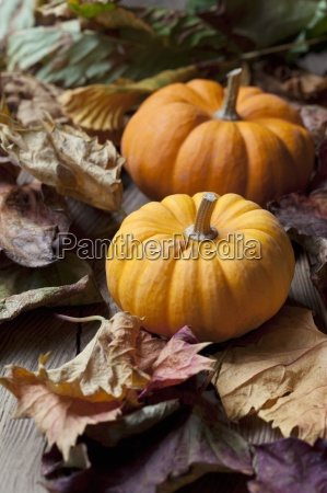 two organic mini pumpkins on autumnal