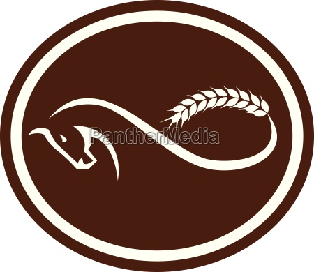 horse malt tail mobius strip oval