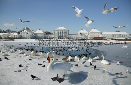 view of birds and nymphenburg castle