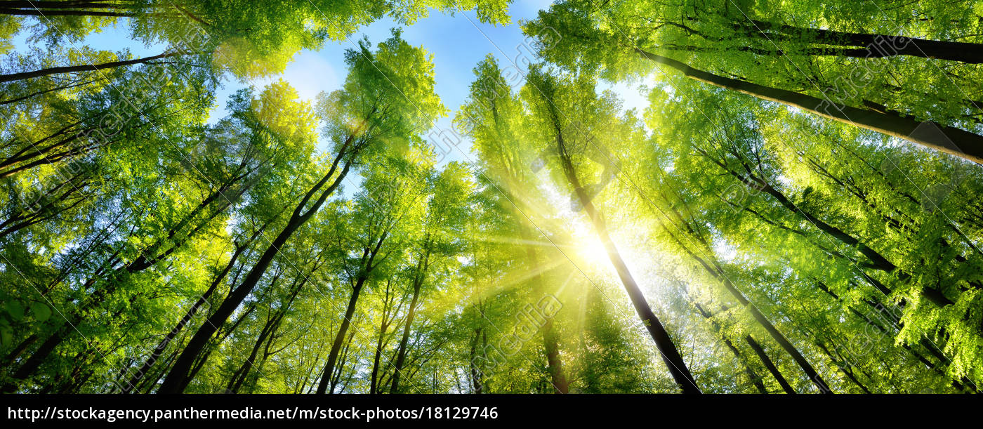 glamorous, sunshine, on, green, treetops, in - 18129746