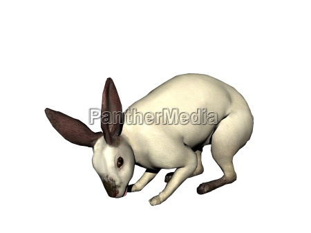hare released