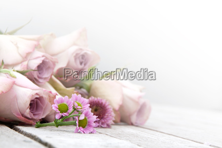 still life with pastel roses and