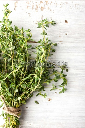bunch of thyme on the white