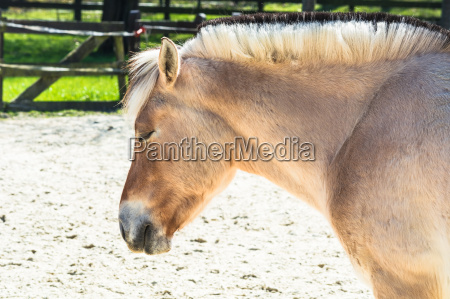 pony on a paddock