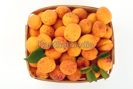 fresh ripe apricots in wooden basket