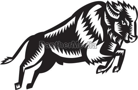 american bison buffalo jumping woodcut