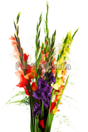 composition with bouquet of gladiolus flowers