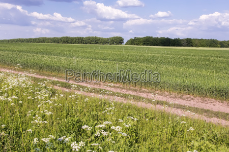 summer landscape on a clear sunny