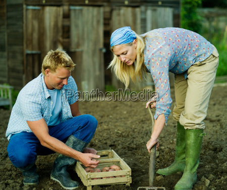 a couple working in a vegetable