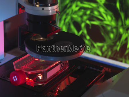 inverted microscope viewing stem cells in