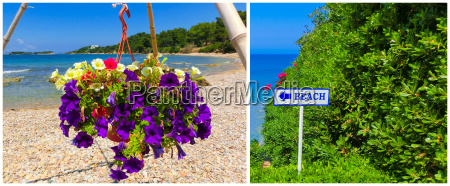 sunny beach with beautiful flowers