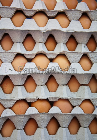 close up of eggs in cartons
