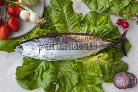 tuna fish on bed of lettuce