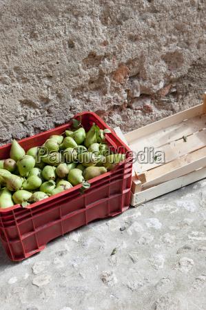 bucket of pears in alleyway
