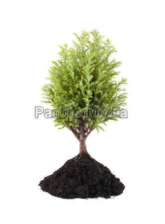 growing small green tree isolated on