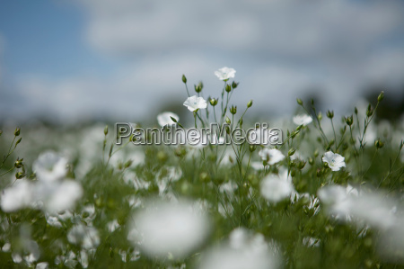 close up of wildflowers in field