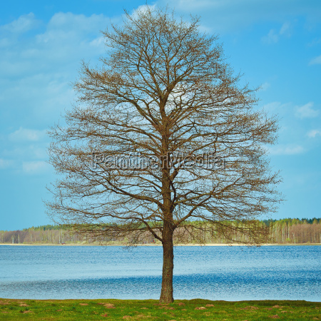 bare tree on the bank