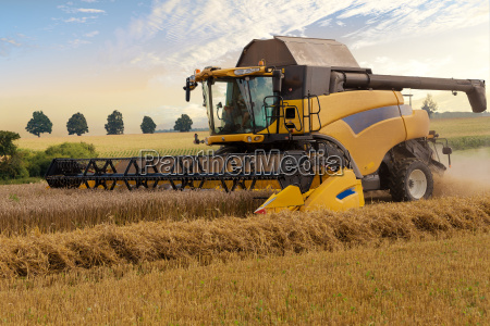 yellov harvester on field harvesting gold