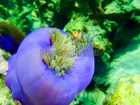 the colorful coral reef with sea