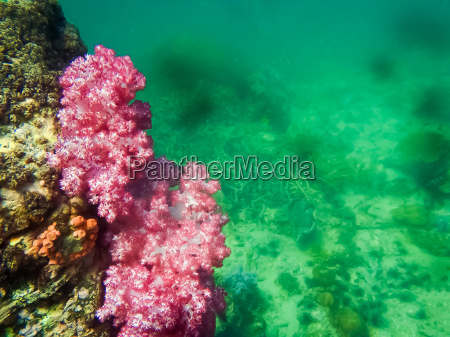 the colorful red coral reef in