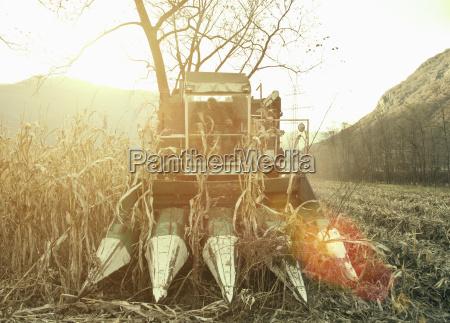 farmer driving harvester in sunlit field