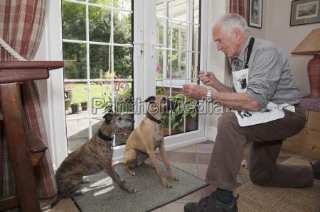 senior man teaching pet dogs to