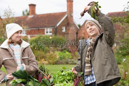 children picking vegetables from garden