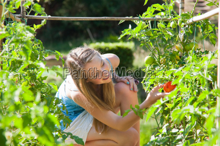 girl picking tomatoes outdoors