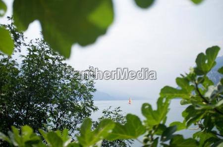 sailboat on lake viewed through leaves