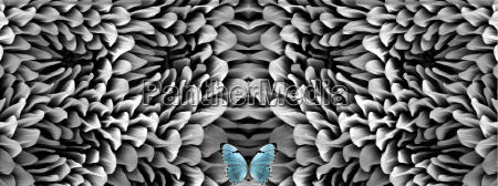 blue butterfly and antenna microstructure digital