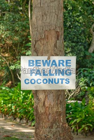 beware of falling coconuts sign yasawa