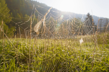 spiders web in field close up