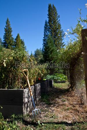 organic vegetable home garden