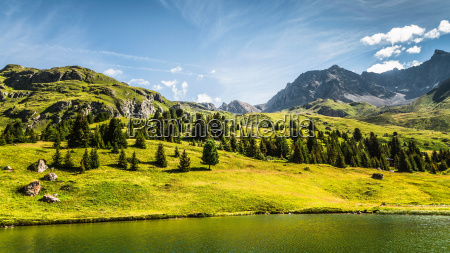trees and lake in grassy rural