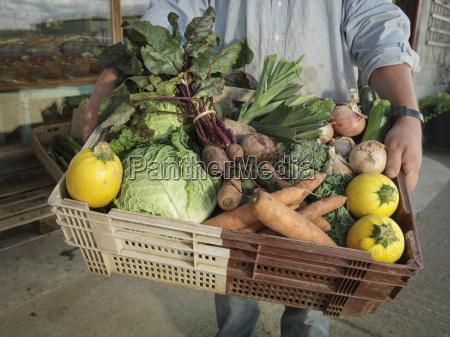 male organic farmer with basket of