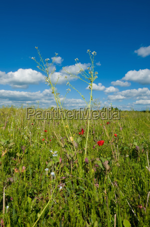 field of wildflowers with long grasses