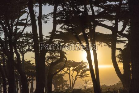 sunset over ocean through trees lands