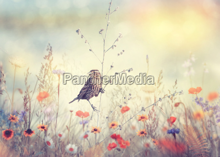 field with wild flowers and a