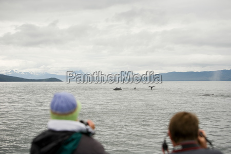 people watching humpback whales