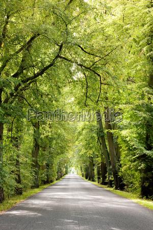 treelined avenue poland