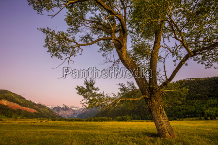 tree growing in rural landscape