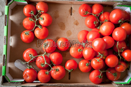 overhead view of ripe tomatoes