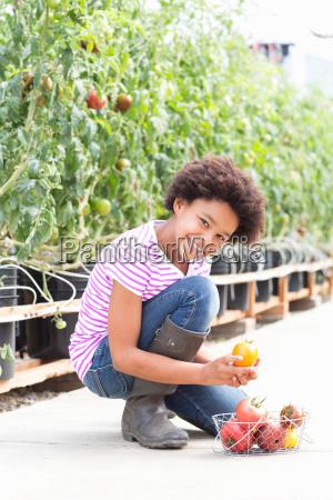 girl picking fresh tomatoes