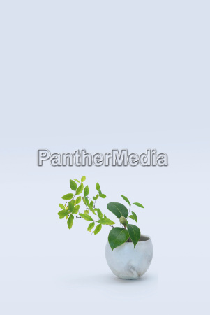 varied stems with green leafs in