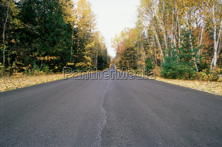 deserted tree lined road
