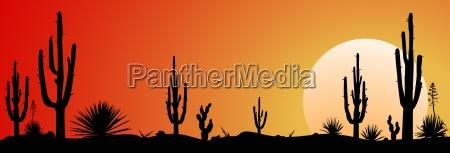 mexico desert sunset