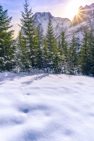 winter sunshine over the forest and