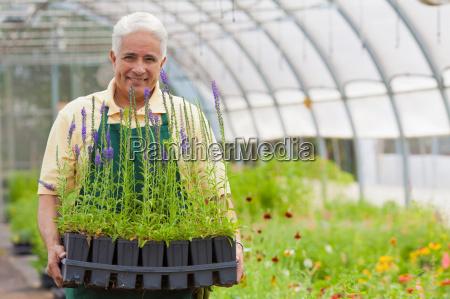 senior man holding plants in garden