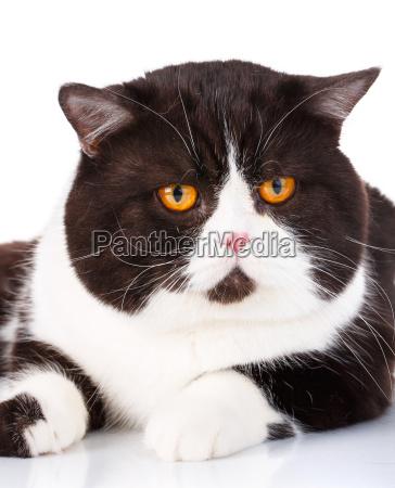 portrait of a cute lying black